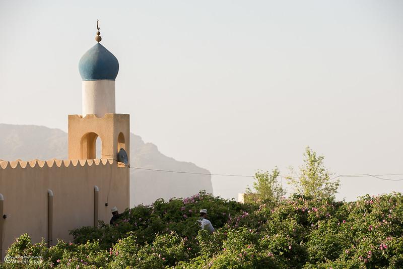 Roses Water (32)-Aljabal Alakhdhar-Oman.jpg