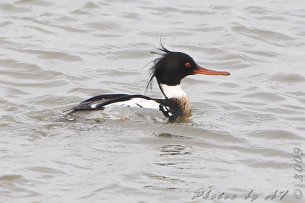 2009-02-12 Riverlands Migratory Bird Sanctuary