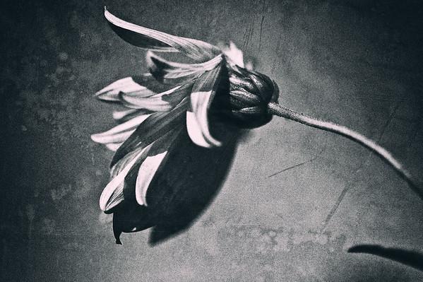 Automne noir et blanc