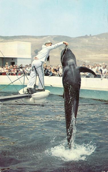 Bubbles the Pilot Whale