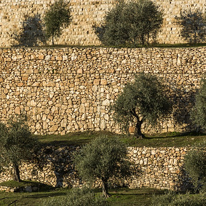 Mount of Olives and surroundings