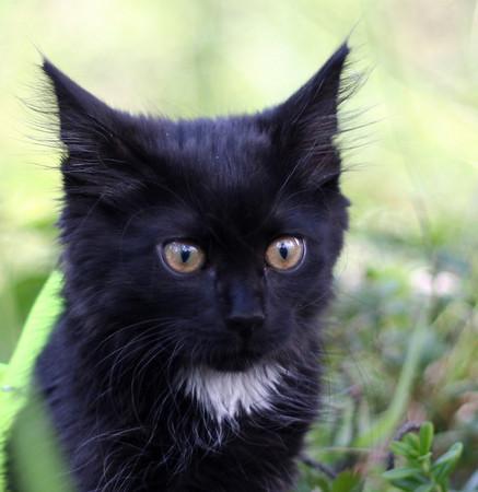 black_kitten