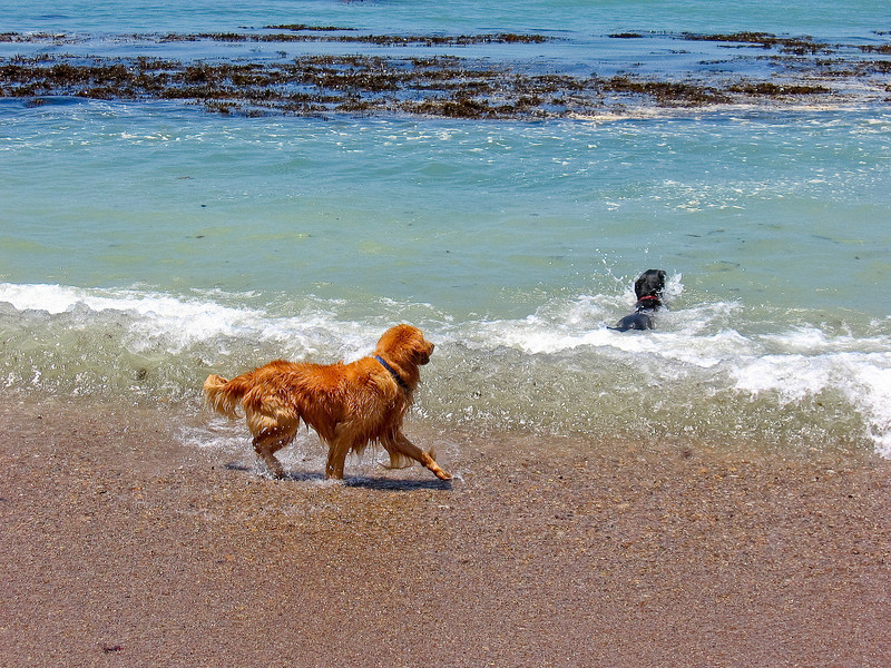 dogs-31.jpg
