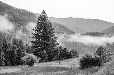 Yellowstone and Grand Teton Park