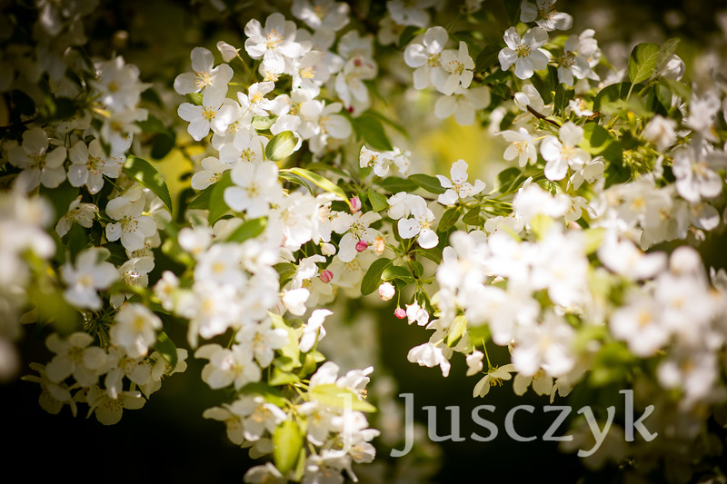 Jusczyk2021-9625.jpg