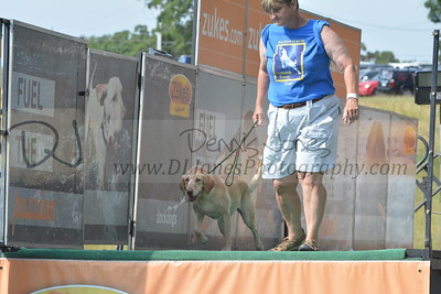 Canine Cannonball - 2016 at Dog Days