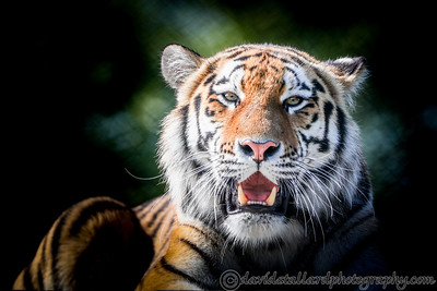 Colchester Zoo 27-08-17