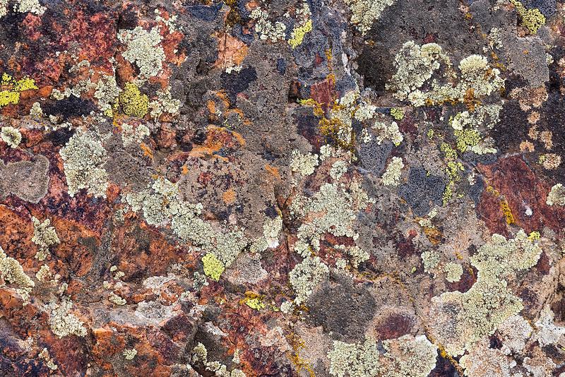 World of Lichen