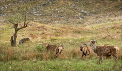 Scotland Animals