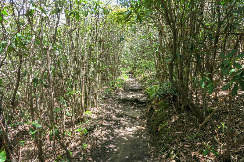 Mountains-to-Sea Trail -- 5,400'