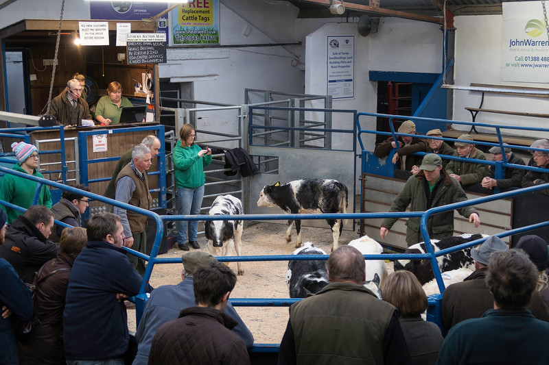Leyburn Friday Cattle Auction, Decemebr 201