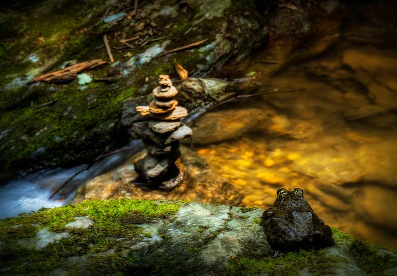 mill creek falls - zen frog (p).jpg