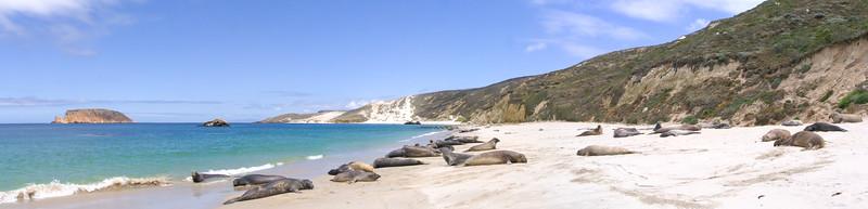 San Miguel Elephants Channel Islands National Park