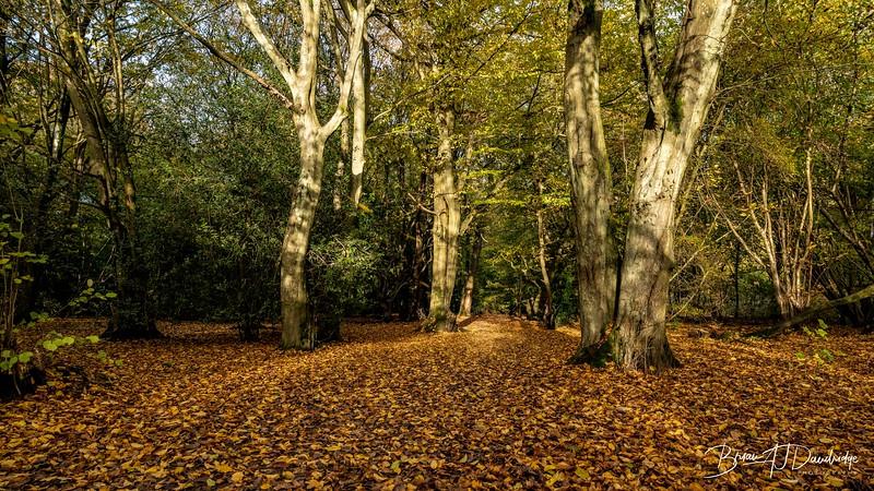 Bedelands_Woodland-5130.jpg