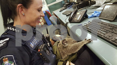 aussie-police-search-of-woman-yields-a-baby-koala