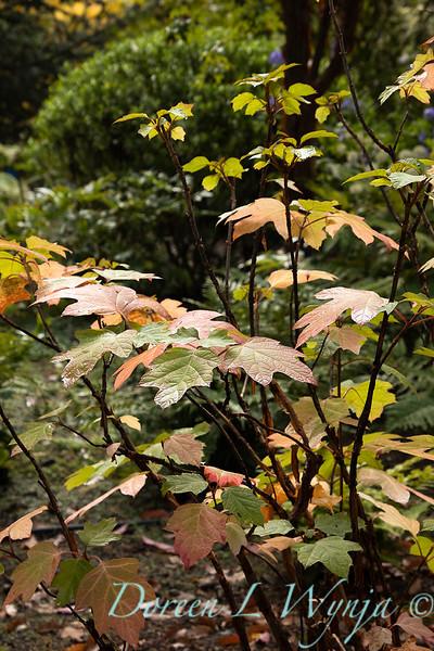 Dietrick fall garden_2106.jpg