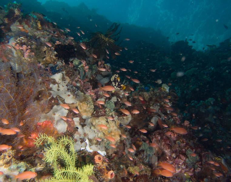 Reef1 (1 of 1).jpg