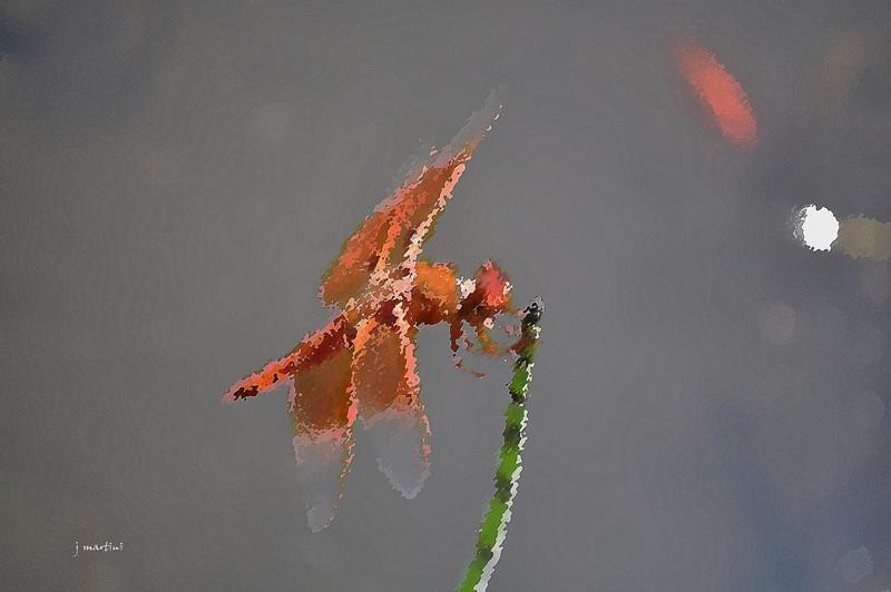 wings 3-6-2011.jpg