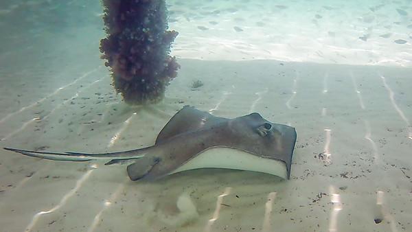 Belize - Underwater Snorkeling Pictures