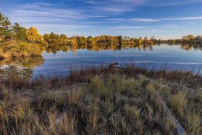 Morning Walk around Viele Lake
