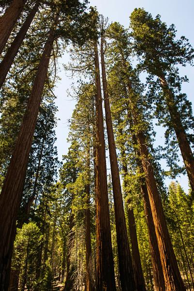 2019 San Francisco Yosemite Vacation 045 - Mariposa Grove.jpg