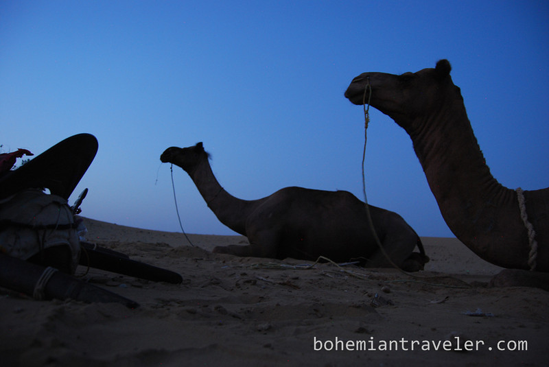 camels resting at night (2).jpg