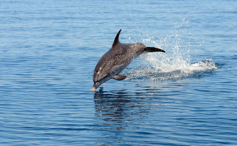 Offshore Dolphins July 2014 MMGINC_4.jpg