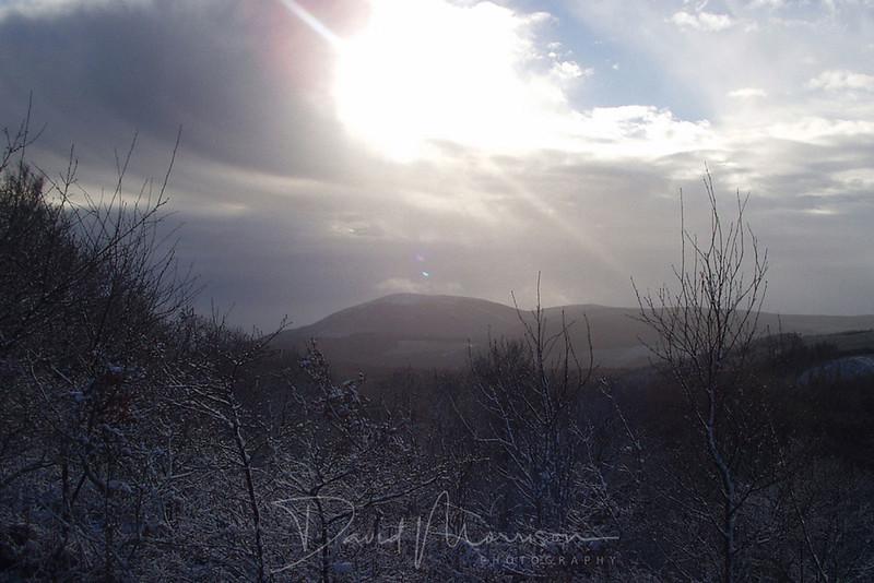 014-Crifel-Winter.jpg