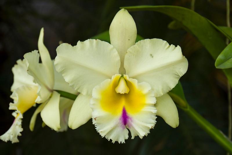 naples_botanical_garden_0047-LR.jpg