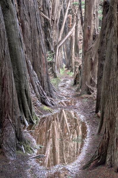 Cypress Plash, Sea Ranch, California