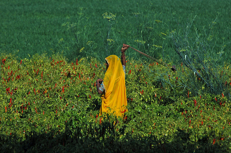 India 2009-078.jpg
