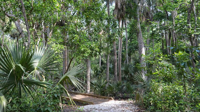 Boardwalk under palm trees