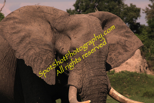 Botswana Lebala