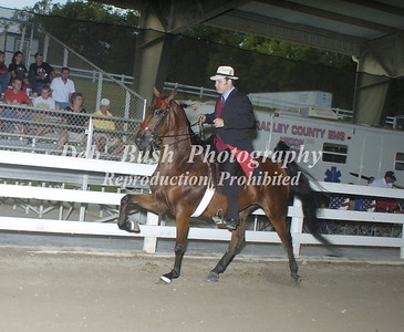 CLASS 6 SADDLEBRED  4 YR & UNDER