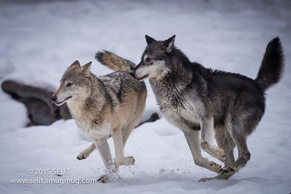 Kalispell, Montana Wildlife Photo Shoot