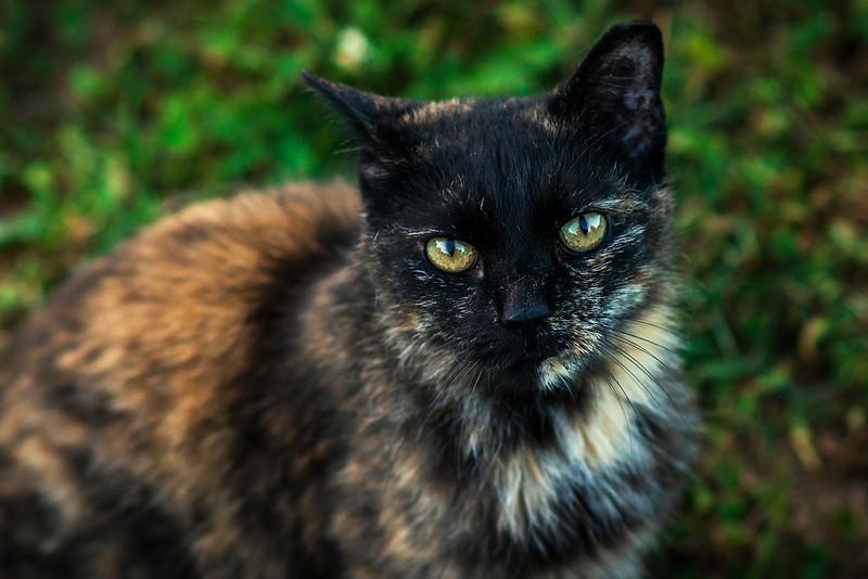 porch cat_DSC2842.jpg