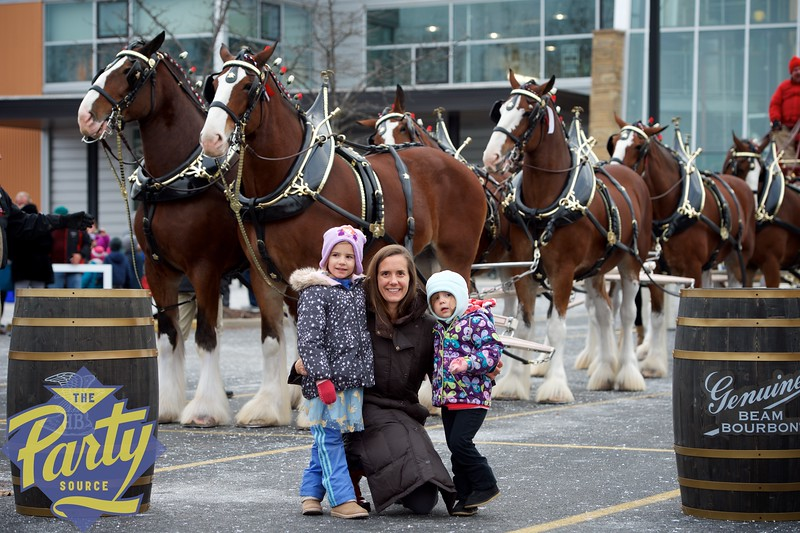 Clydesdale Portraits 27.jpg