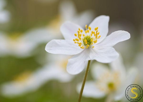 Blomar - Flora