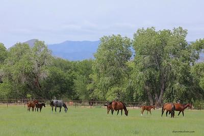 Rancho Corazon Foals 2019