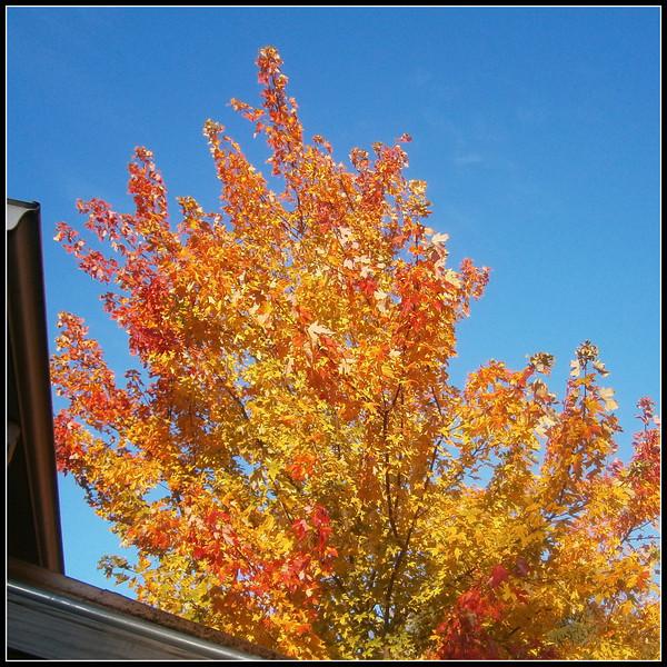 fall (4).jpg