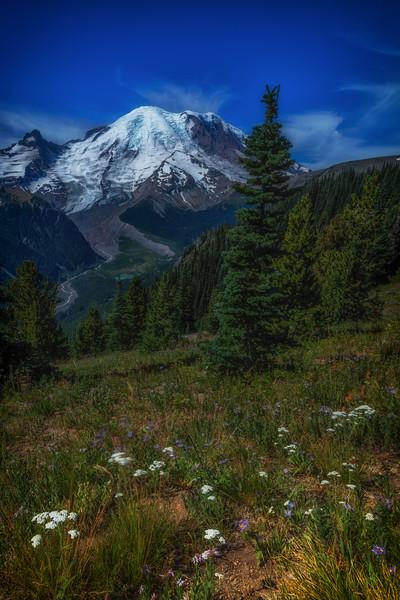 silverforest-3.jpg