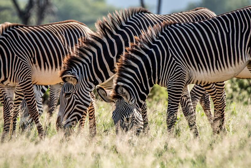 Samburu (6 of 70).jpg