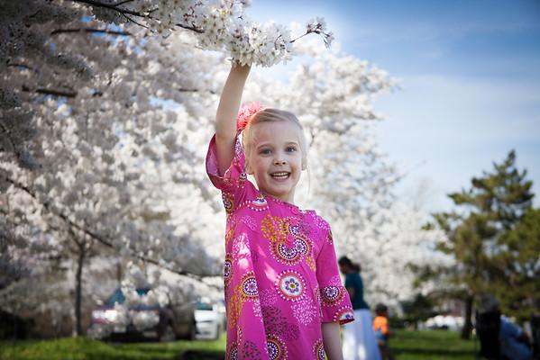 Webb Family, Cherry Blossoms 2015