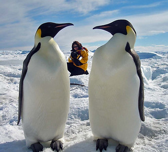 Antarctica 2006 Emperor Penguins