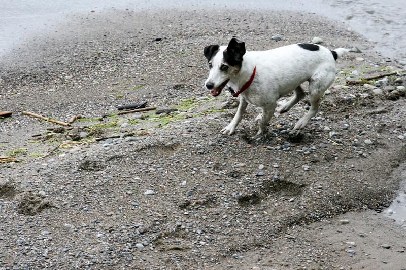 farley pups 029-2 (1).jpg