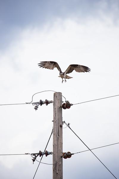 osprey vertical-3067.jpg