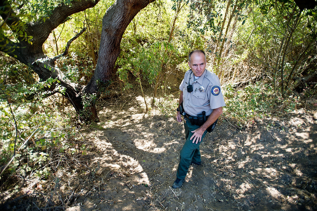 . Ranger Kim Sawyer inspects a creek bed for feral cows during his patrol near Telegraph Road at Chino Hills State Park on Wednesday, Oct. 2, 2013. (Photo by Watchara Phomicinda/San Gabriel Valley Tribune)