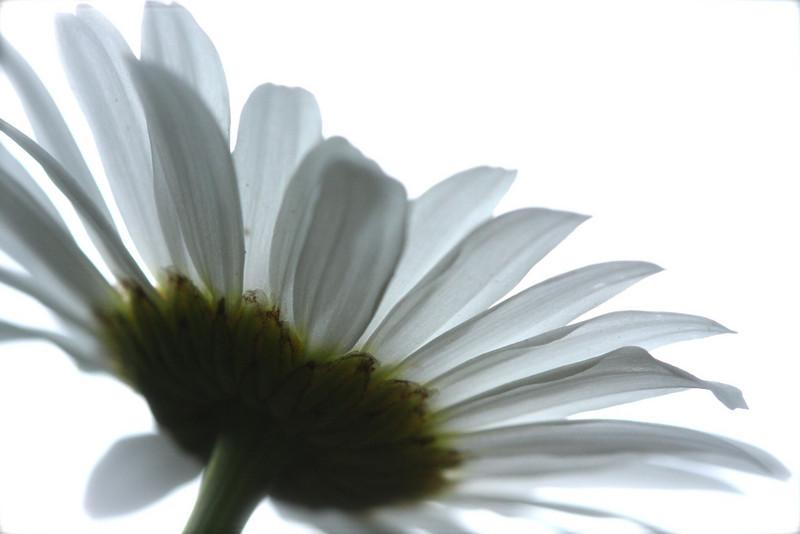 705067244_snwshflowers_45-852129295-O.jpg