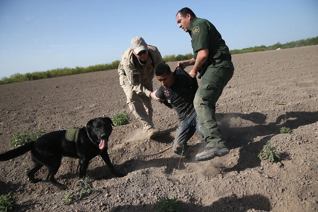 . MISSION, TX - APRIL 11:  A U.S. Border Patrol canine team works with an U.S. Air and Marine agent to detain an undocumented immigrant after chasing him down near the U.S.-Mexico border on April 11, 2013 near Mission, Texas. A group of 16 immigrants from Mexico and El Salvador said they crossed the Rio Grande River from Mexico into Texas during the morning hours before they were caught. The Rio Grande Valley sector of has seen more than a 50 percent increase in illegal immigrant crossings from last year, according to the Border Patrol. Agents say they have also seen an additional surge in immigrant traffic since immigration reform negotiations began this year in Washington D.C. Proposed refoms could provide a path to citizenship for many of the estimated 11 million undocumented workers living in the United States.  (Photo by John Moore/Getty Images)