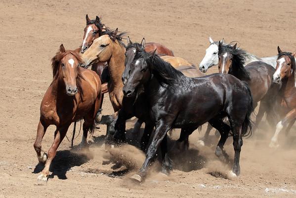 Rodeo  Broncs